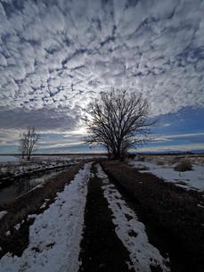 夕暮れ時の沈む太陽が描き出す雲の模様を背景に伸びる雪の残る未舗装の一本道の写真素材 [FYI03135310]