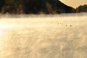 宮ヶ瀬湖 光と輝きの写真素材 [FYI03135883]