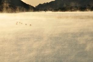 宮ヶ瀬湖 光と輝きの写真素材 [FYI03135890]