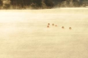 宮ヶ瀬湖 光と輝きの写真素材 [FYI03135892]