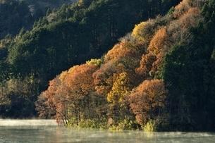 秋色の湖畔の写真素材 [FYI03135901]
