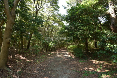 森の写真素材 [FYI03136036]
