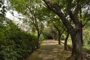 森の写真素材 [FYI03136041]