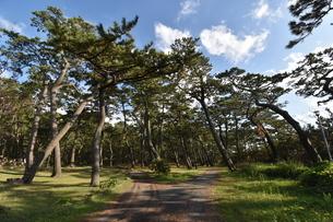 森、分かれ道の写真素材 [FYI03136049]
