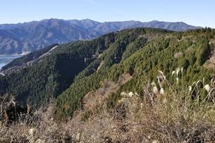 南山から丹沢山地の眺望の写真素材 [FYI03136535]