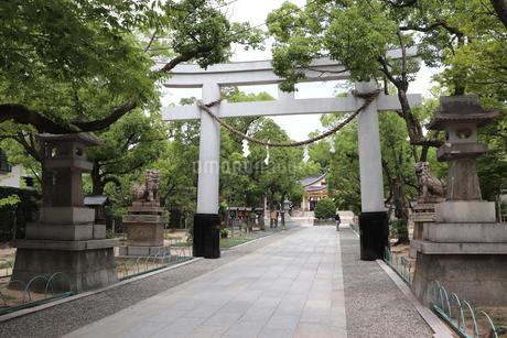 緑豊かな神社の参道の写真素材 [FYI03136793]