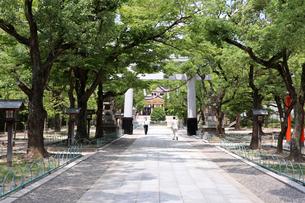 夏の神社参拝の写真素材 [FYI03136795]