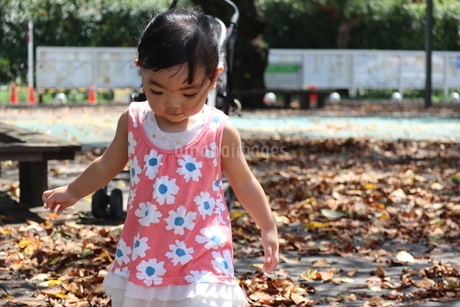 落ち葉を踏む音を楽しむ女の子の写真素材 [FYI03136855]