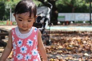 落ち葉の上を歩く女の子の写真素材 [FYI03136856]