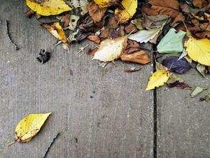 秋風と黄色い落ち葉の写真素材 [FYI03136859]