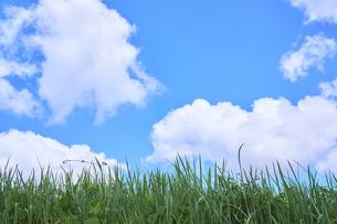 青空 雲 平原 草の写真素材 [FYI03136977]