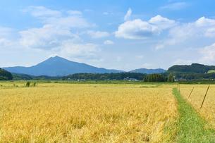 秋の田園風景 筑波山の写真素材 [FYI03136983]