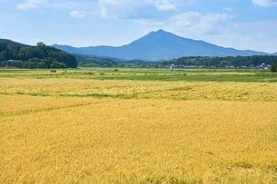 稲田と筑波山の写真素材 [FYI03136986]