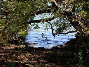 隙間から覗く湖の写真素材 [FYI03137176]
