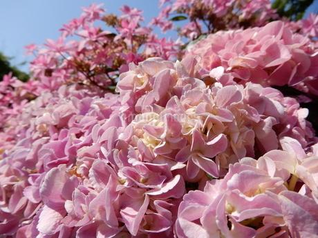 咲き乱れる花の写真素材 [FYI03137177]