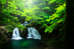赤目四十八滝の荷担滝と緑の森の写真素材 [FYI03137183]