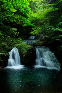 赤目四十八滝に緑の森の写真素材 [FYI03137184]