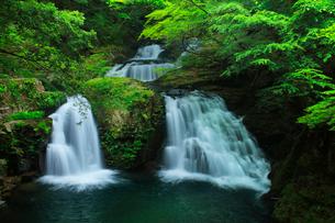 赤目四十八滝 荷担滝と新緑の写真素材 [FYI03137185]
