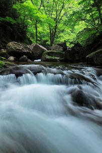 赤目四十八滝の清流と緑の森の写真素材 [FYI03137187]