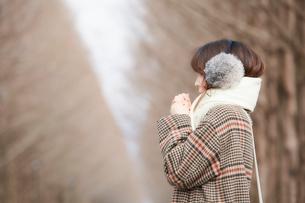 枯れ木が整列した道で寒そうにする女性の写真素材 [FYI03137502]
