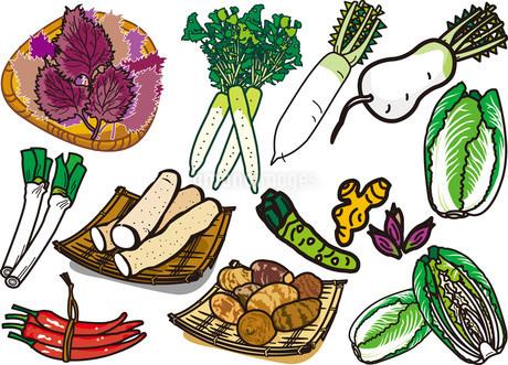 野菜16のイラスト素材 [FYI03137873]