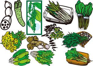野菜15のイラスト素材 [FYI03137875]