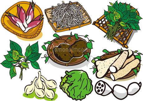 野菜14のイラスト素材 [FYI03137876]