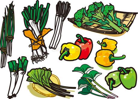 野菜12のイラスト素材 [FYI03137878]