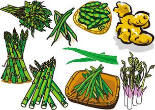 野菜1のイラスト素材 [FYI03137889]
