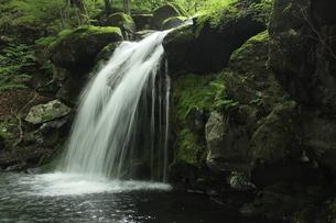 創造の滝 県民の森の滝の写真素材 [FYI03137908]