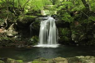 創造の滝 県民の森の滝の写真素材 [FYI03137909]