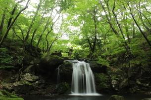 創造の滝 県民の森の滝の写真素材 [FYI03137911]