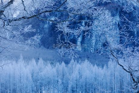 霧氷が美しい氷点下の朝の上高地の写真素材 [FYI03138066]