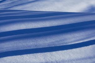 冬の森の陰影の写真素材 [FYI03138087]