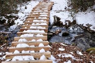 笠取山 雪の源流のみちの木道の写真素材 [FYI03138245]
