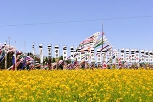 那須岳と菜乃花畑と鯉のぼりの写真素材 [FYI03138267]