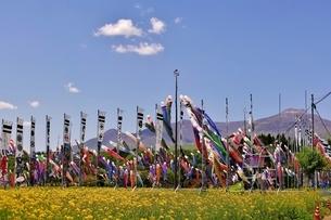 那須岳と菜乃花畑と鯉のぼりの写真素材 [FYI03138268]