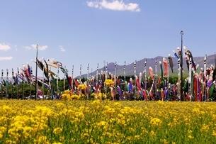 那須岳と菜乃花畑と鯉のぼりの写真素材 [FYI03138271]