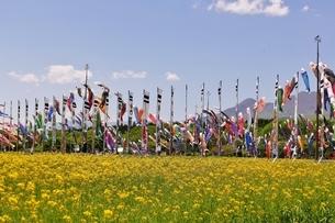 那須岳と菜乃花畑と鯉のぼりの写真素材 [FYI03138272]