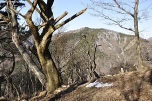 初冬の鍋割山から雨山の写真素材 [FYI03139315]