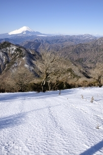 雪化粧の丹沢山地からの富士山の写真素材 [FYI03139342]