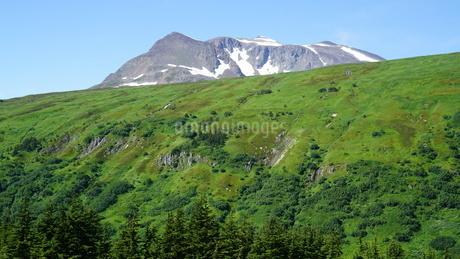 アラスカ Seward アメリカ 17の写真素材 [FYI03139388]