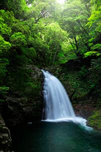 赤目四十八滝 不動滝と緑の森の写真素材 [FYI03139505]