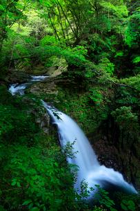 赤目四十八滝 不動滝に新緑の森の写真素材 [FYI03139506]