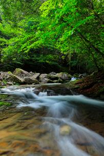 赤目四十八滝の清流に新緑の写真素材 [FYI03139509]