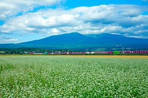 そば畑と貨物列車の写真素材 [FYI03139683]