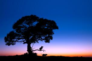 夜明けとネズミのシルエットの写真素材 [FYI03139745]
