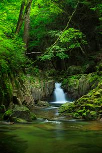赤目四十八滝の清流と新緑の写真素材 [FYI03139759]
