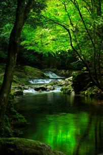 赤目四十八滝の清流と新緑の写真素材 [FYI03139760]