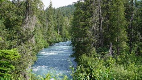 アラスカ Seward アメリカ 37の写真素材 [FYI03139846]